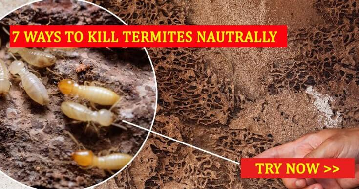 How To Kill Termites Naturally 7 Simple Methods To Get Rid Of - How-to-remove-termites-from-furniture