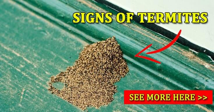 9 Signs Of Termites Infestation Kill Termites Guide