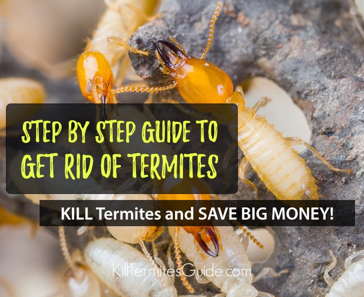 How to Get Rid of Termites: Step by Step Guide with Video
