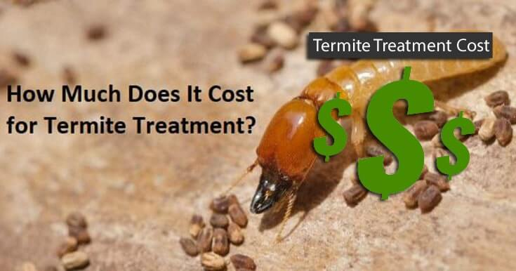 Termite Treatment Cost: Everything You Need to Know