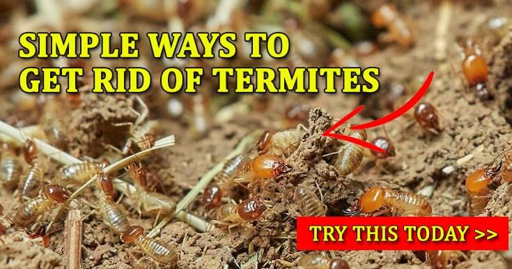 How To Get Rid Of Termites 7 Simple Ways To Kill Termites