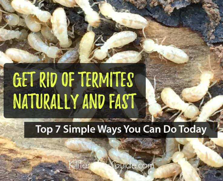 How to Get Rid of Termites: 7 Simple Ways You Can Do Today