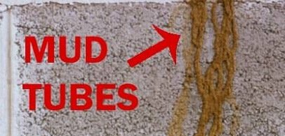 Signs of Termites: Mud Tubes