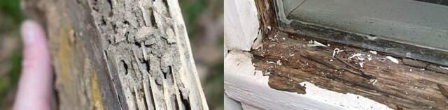 Dấu hiệu mối mọt: Thiệt hại gỗ