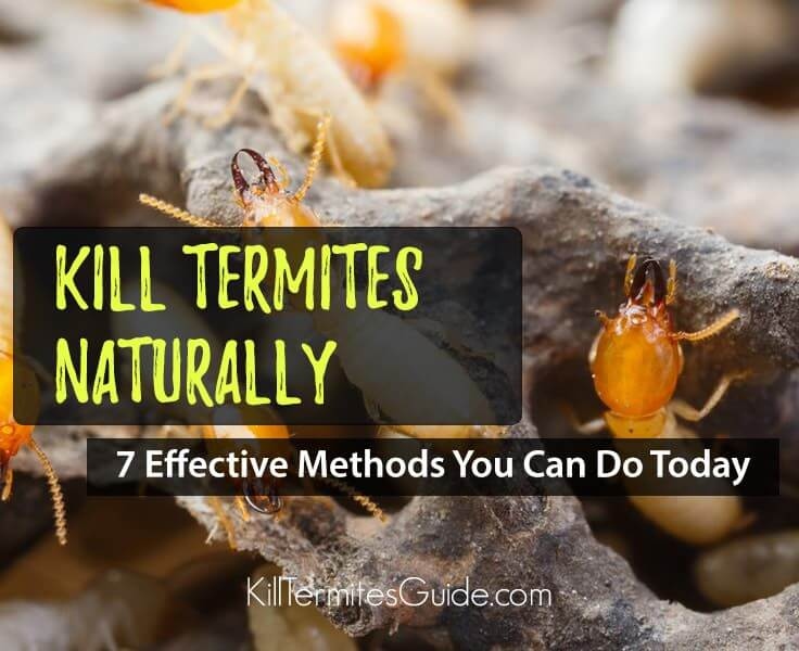 How to Kill Termites Naturally: Top 7 Natural Ways You Can Do Today