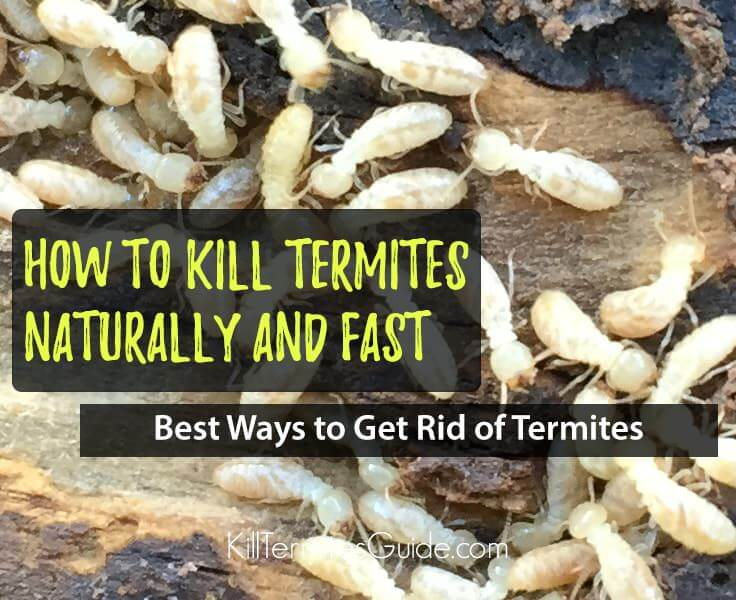 How to Kill Termites: The Only Guide You Need