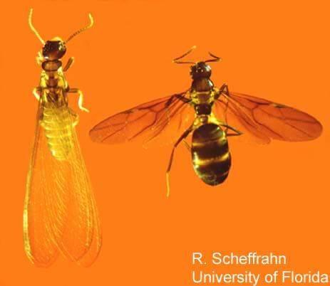 Termites vs Ants: Testing